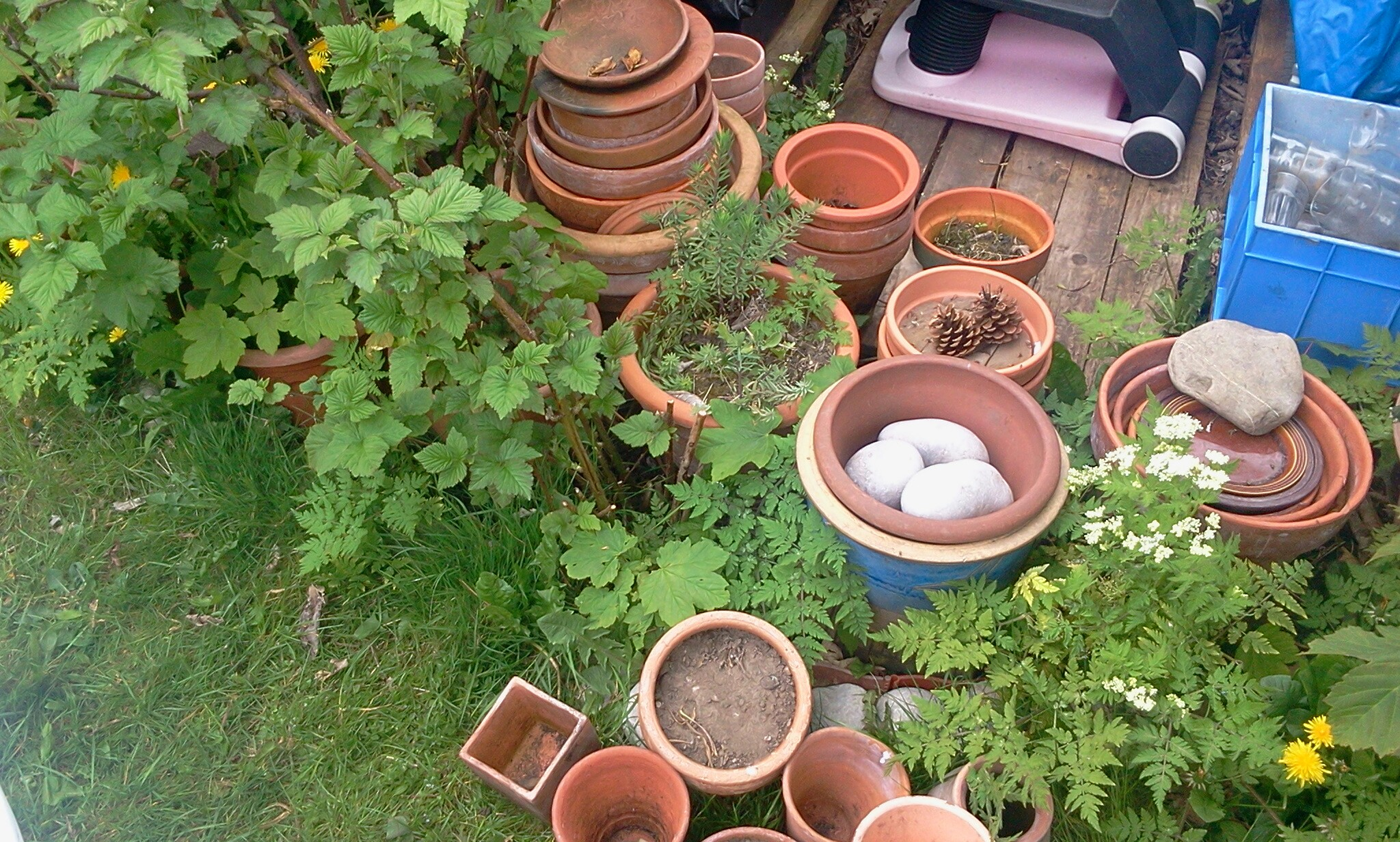 Clay Plant Pots For Sale In Uk 70 Used Clay Plant Pots