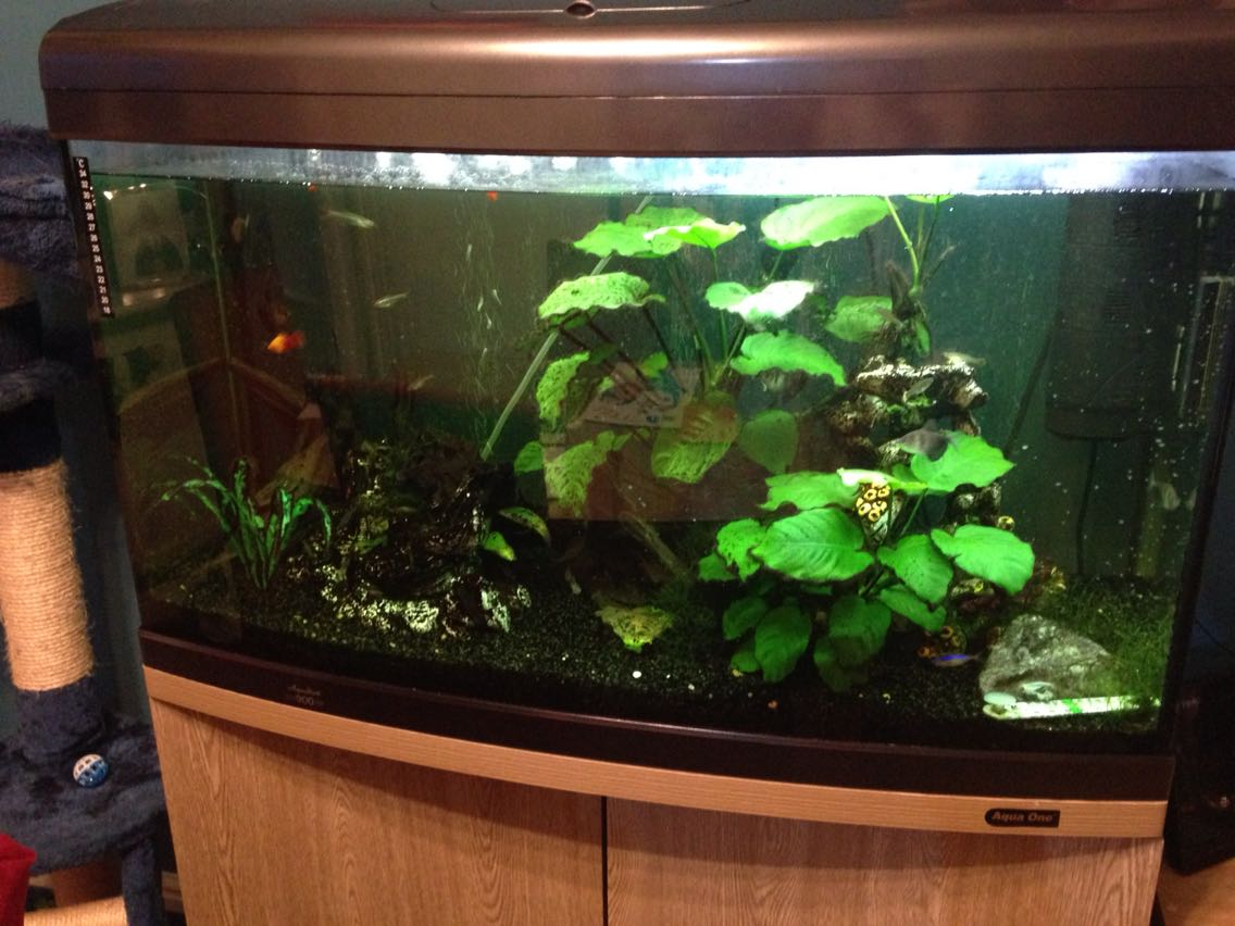 Oak fish tank for sale in uk 49 used oak fish tanks for Setting up a fish tank