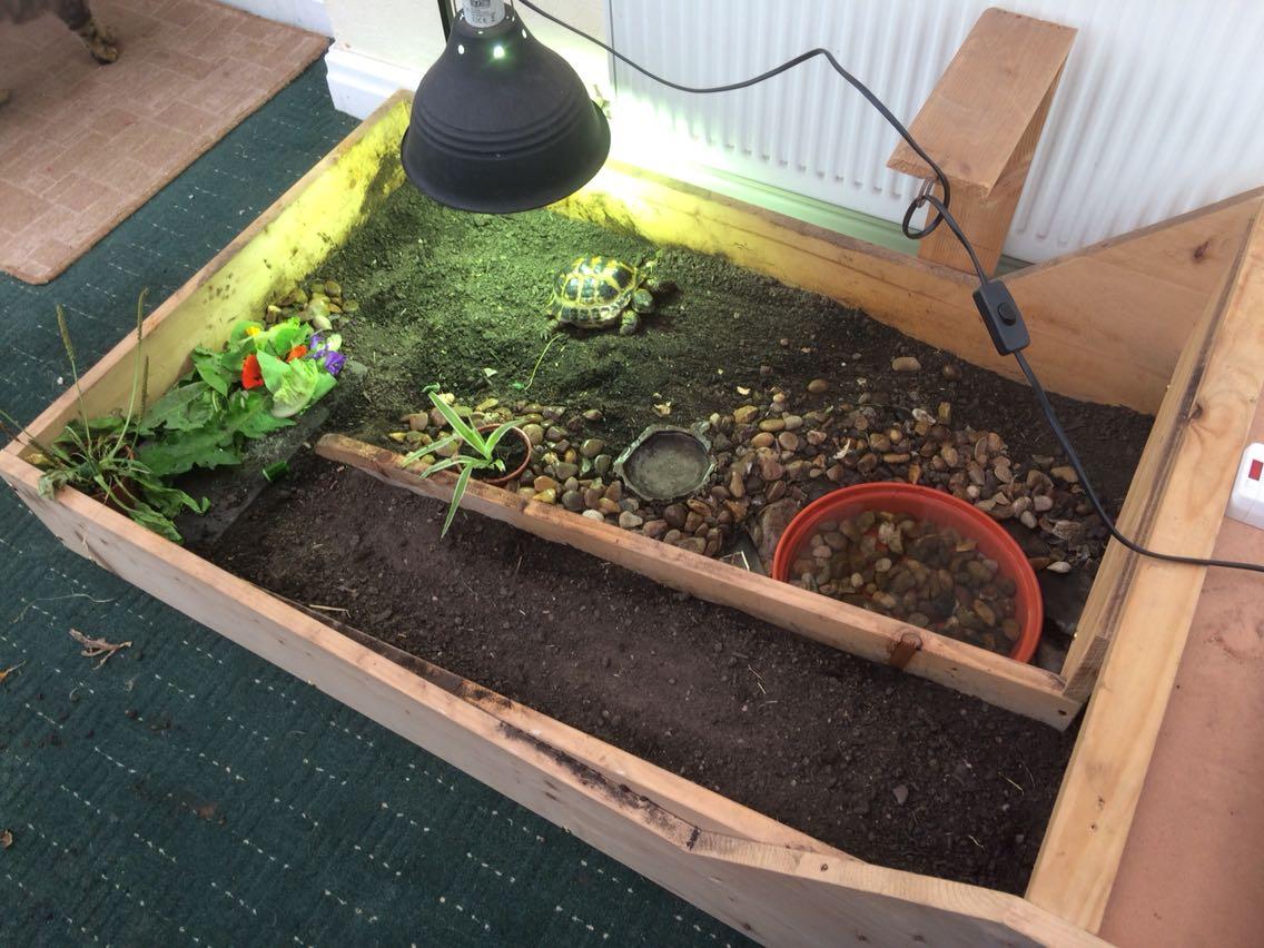 Tortoise table for sale in uk 55 used tortoise tables for Tortoise table org uk