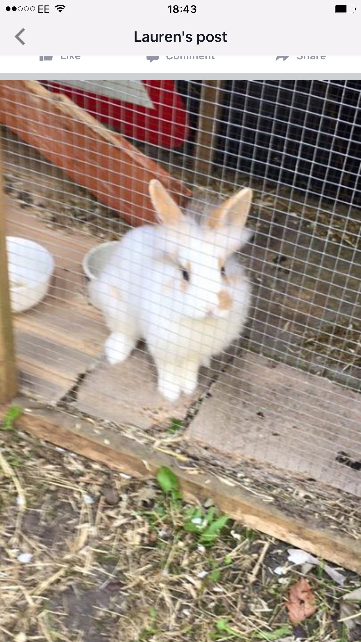 rabbit hutches - Local Classifieds, For Sale in Kent ...
