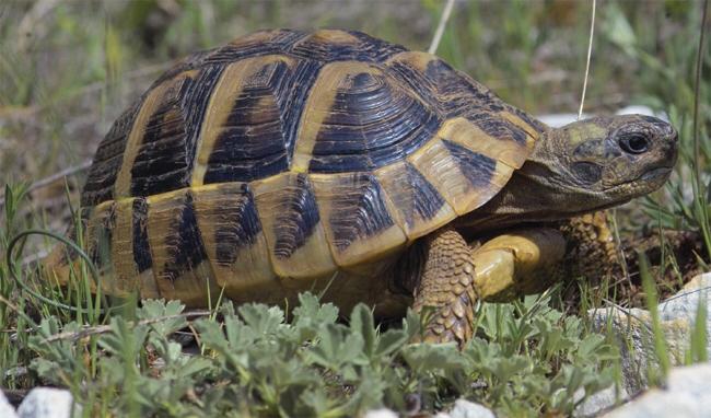 Image 10 of Tortoise Rescue Centre