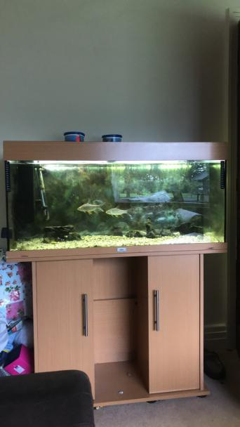 tropical fish - Fish & Fish Tanks, Rehome Buy and Sell | Preloved