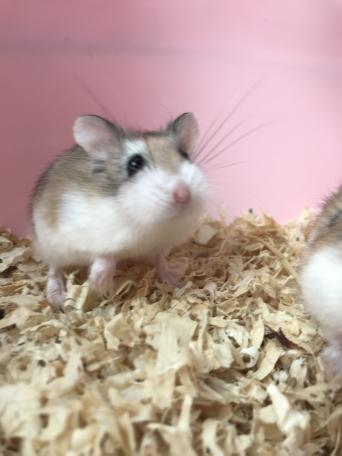 mouse cages - Local Classifieds, For Sale | Preloved