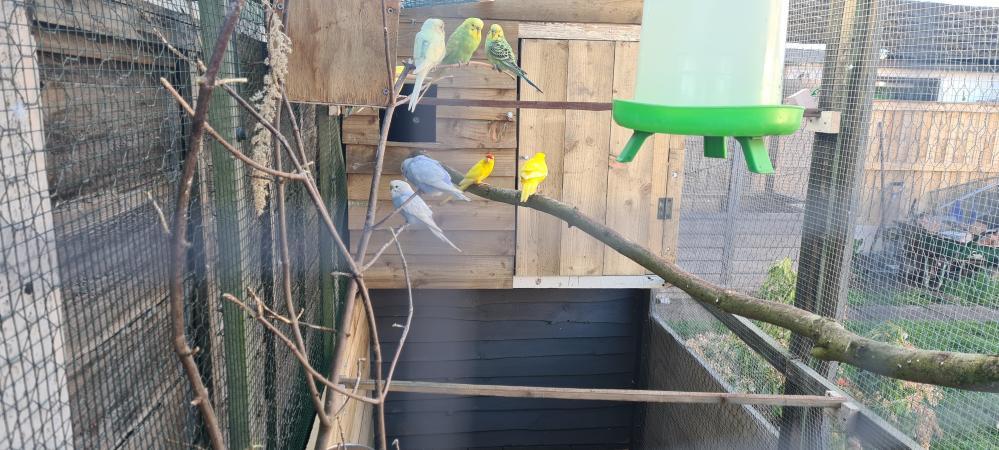 Image 2 of wanted aviary birds