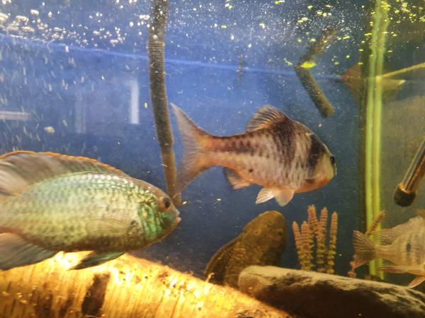 Image 1 of 3 x t barbs
