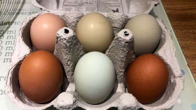 Preview of the first image of RAINBOW HATCHING EGGS.