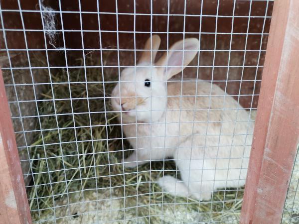 Image 4 of rabbit