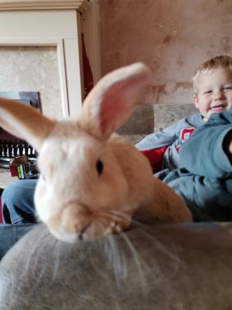 Image 3 of rabbit