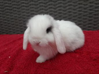 Rabbits, Rehome Buy and Sell | Preloved