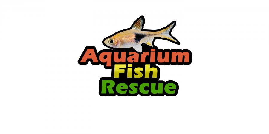 Image 1 of ***Fish Rehoming***