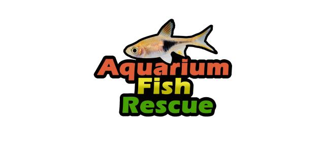 Preview of the first image of ***Fish Rehoming***.