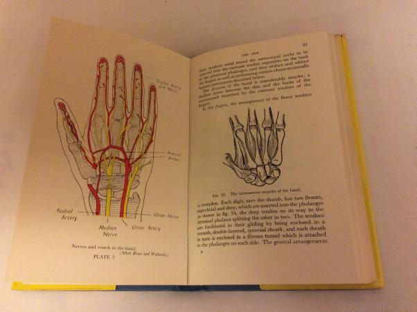 Image 4 of Teach yourself Anatomy