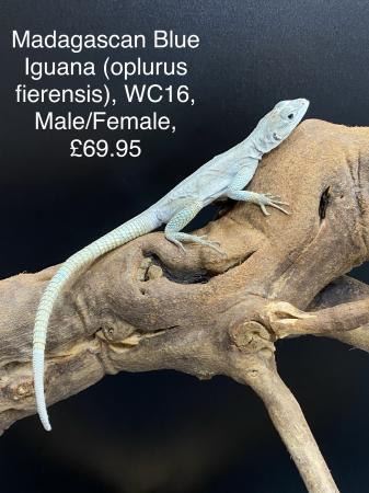 Image 2 of Lizard Jan 2021 Stock List