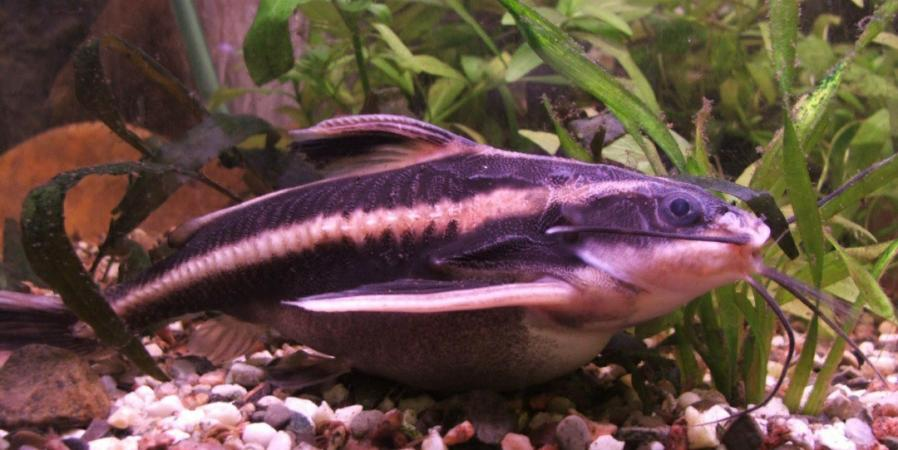 Image 4 of tropical fish
