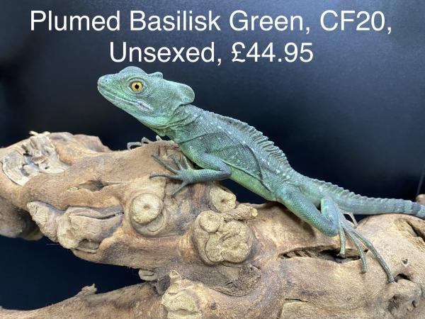 Image 1 of Lizard Jan 2021 Stock List