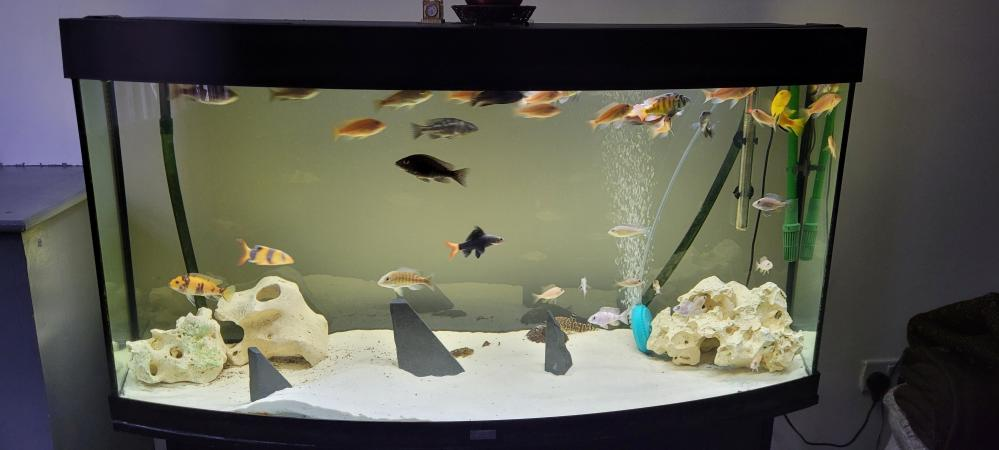 Image 2 of 4 foot fish tank