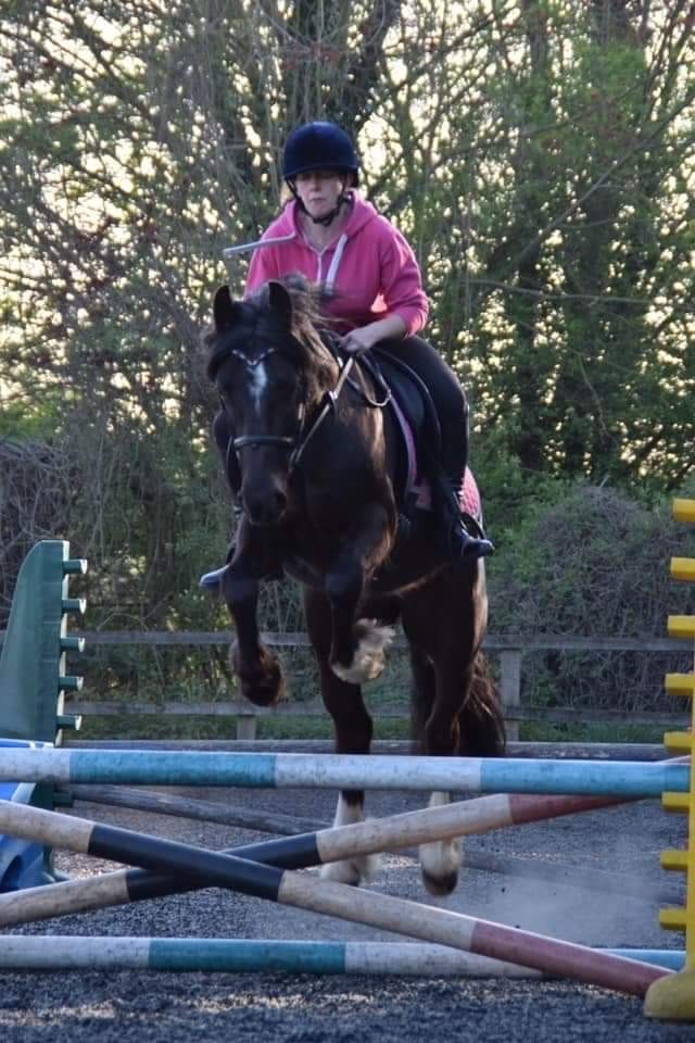 Preview of the first image of 13'3/14hh welsh for part share.