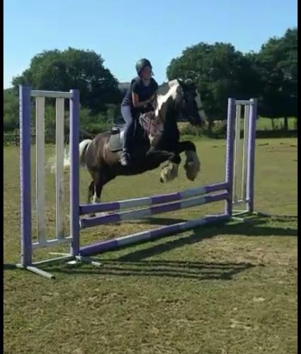 Looking to loan or buy a trustworthy jumping pony 15