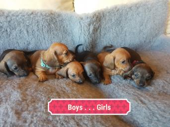 Dogs and Puppies, Rehome Buy and Sell in the UK and ...