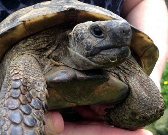 Image 8 of Tortoise Rescue Centre