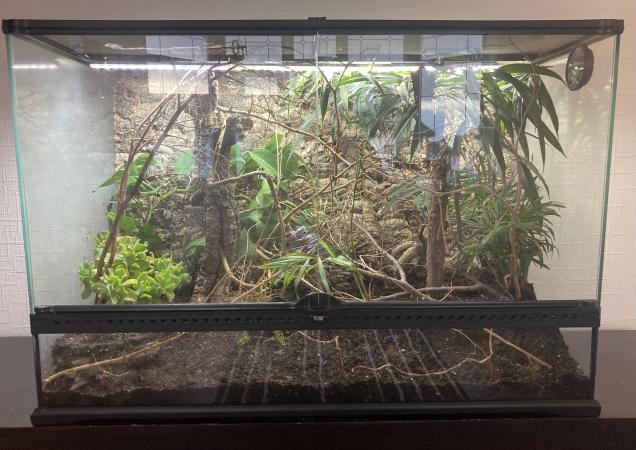 Image 1 of Large Exo Terra Bioactive Vivarium 90cm x45cm x45cm