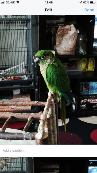 parrot - Birds, For Sale in Salisbury | Preloved