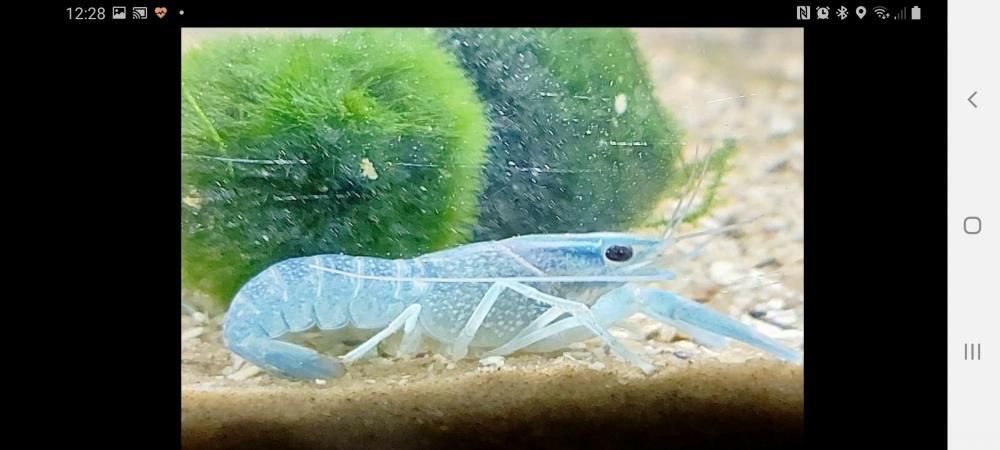 Image 1 of fish shrimp cray fish corydoras all tropical