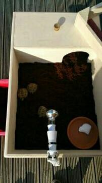 tortoise pets in burnley preloved rh preloved co uk