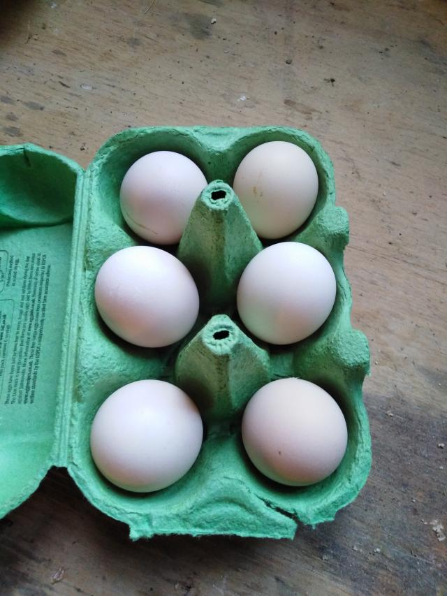Preview of the first image of Pekin Bantam Hatching Eggs.
