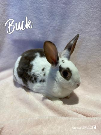 Image 2 of Baby bunnies