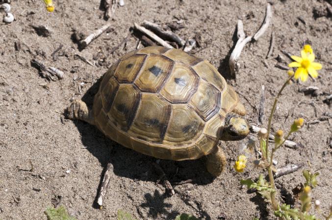 Image 14 of Tortoise Rescue Centre
