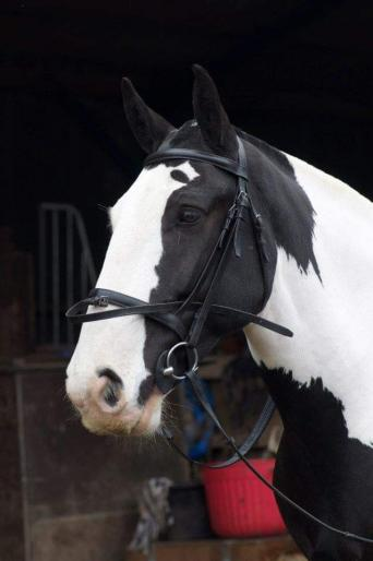 english leather bridles - Second Hand Horse Tack and