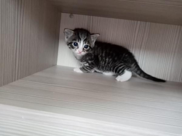 Kittens For Sale For Sale In Bridgwater Somerset Preloved