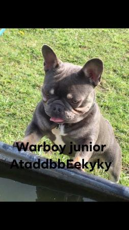 Image 7 of Kc Warboy junior for stud. Quad AT/a. Proven silver tested