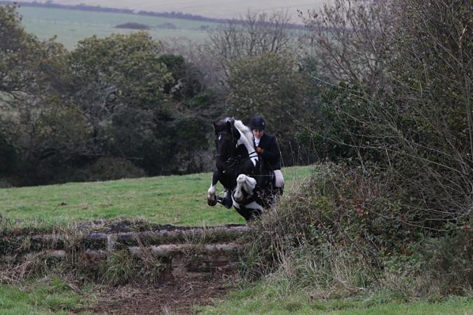 Image 2 of Looking for a 2 horse's for sisters!!