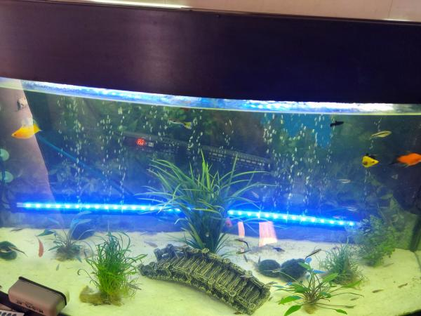 Image 3 of we rehome unwanted fish