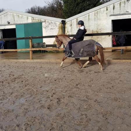 ponies and horses for loan in essex