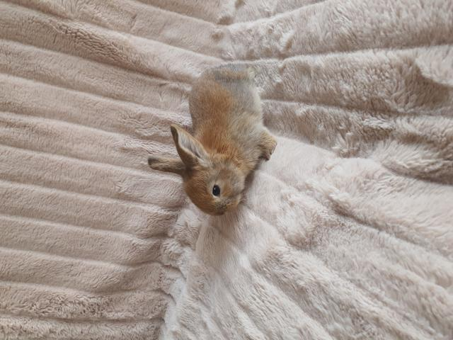 Preview of the first image of baby rabbits.