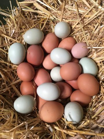 Preview of the first image of Fertile chicken eggs. Large fowl. Hatching eggs.