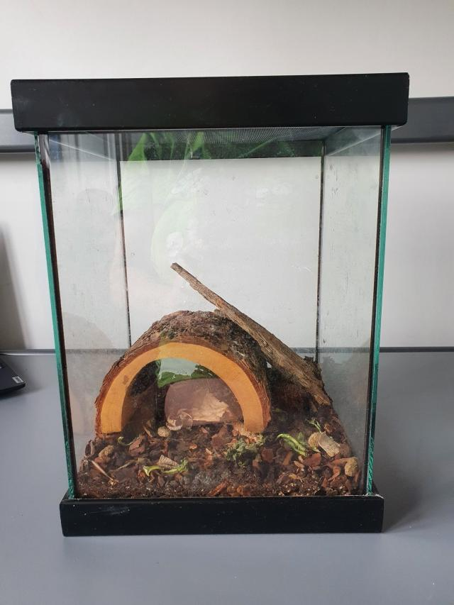 Preview of the first image of Madagascar Hissing Cockroaches and tank.