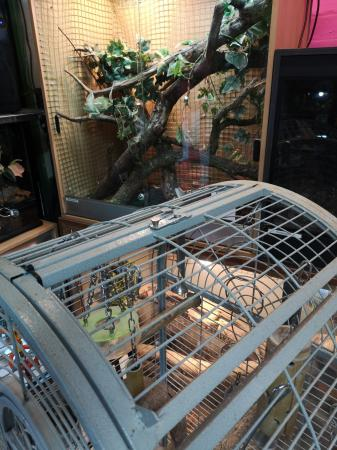 Image 2 of parrot cage for sale