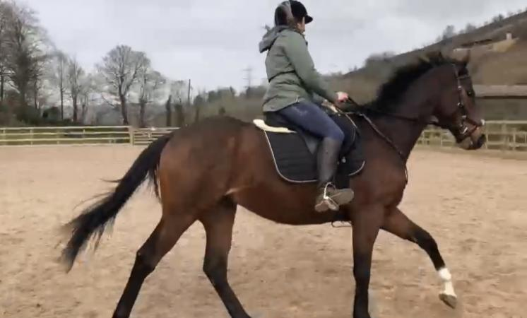 Image 2 of Experienced rider wanted for part share