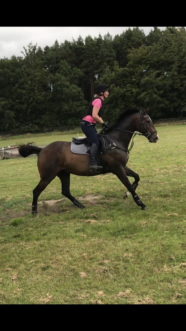Preview of the first image of 16.2 Gelding for part loan.