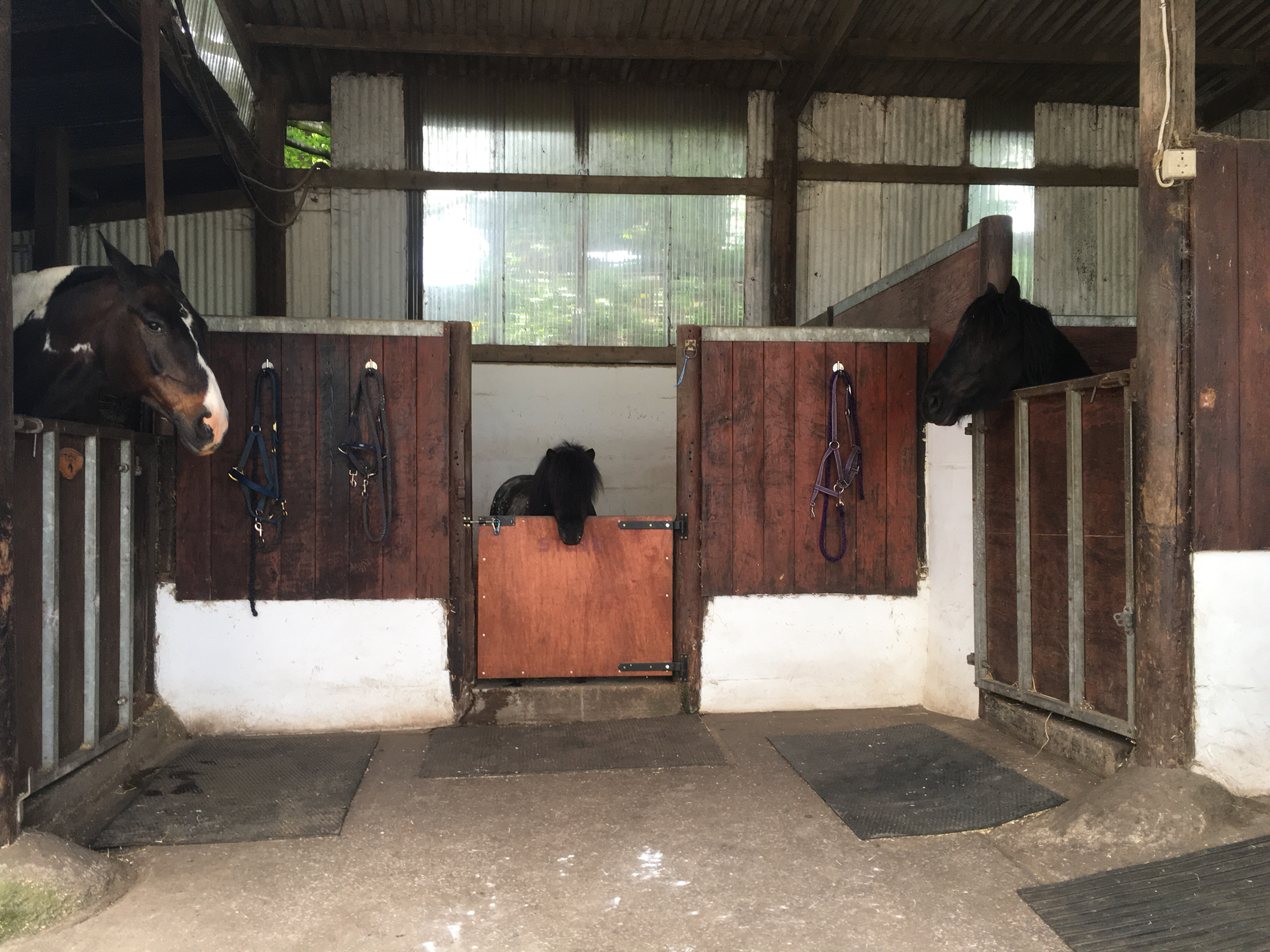 Stables available with own tack room for sale  Stockport
