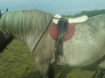 treeless saddle - Second Hand Horse Tack and Clothing, Buy and Sell