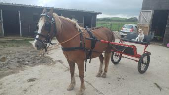 horse carriages or carts - Second Hand Horse Tack and Clothing, Buy