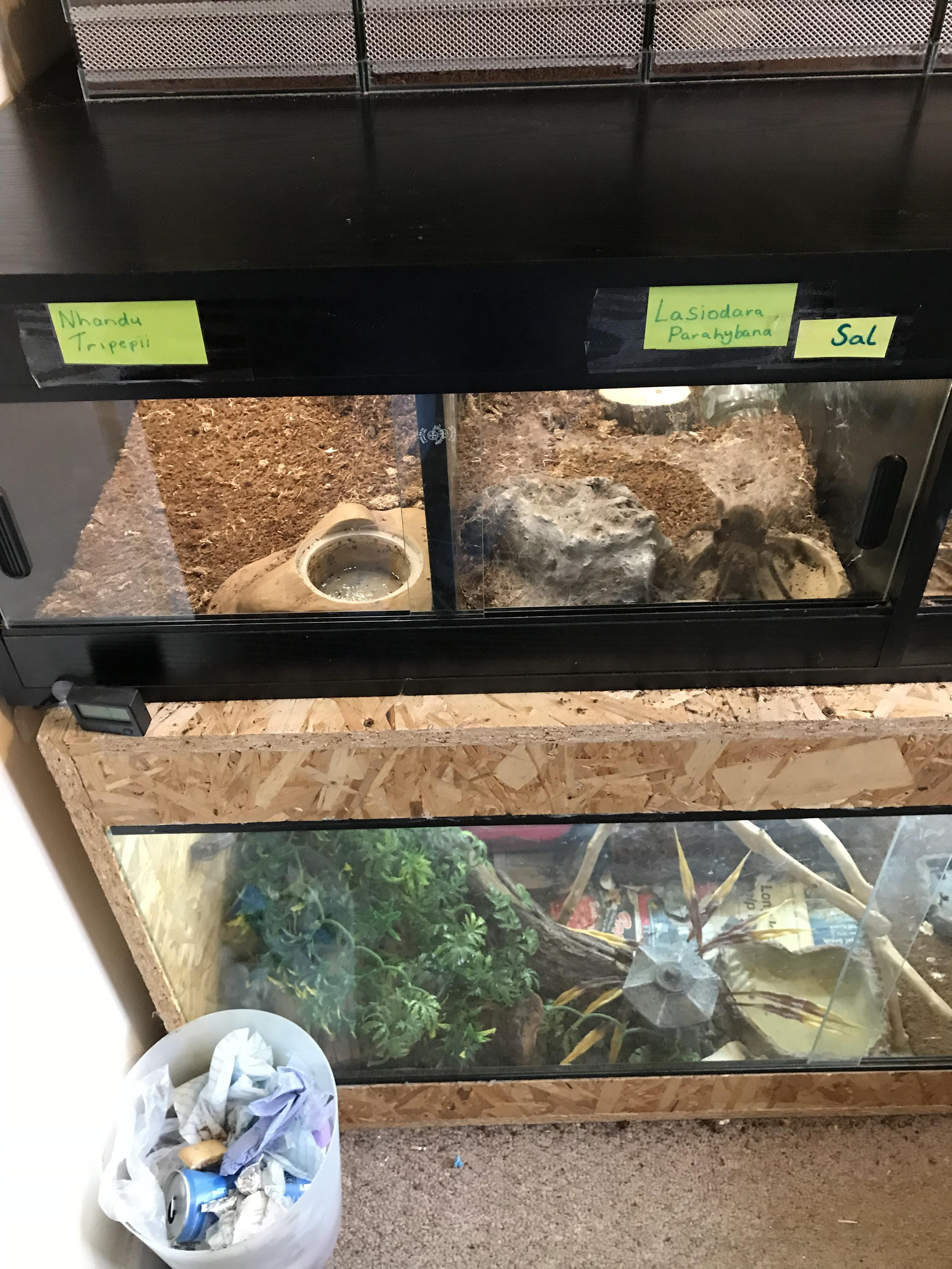 Tarantula Vivarium Local Classifieds Preloved