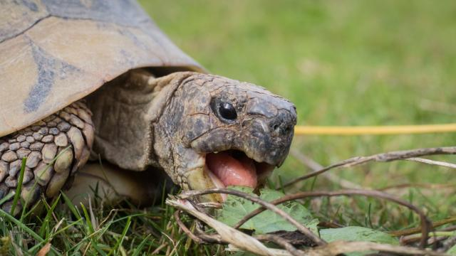 Preview of the first image of Tortoise taken in.