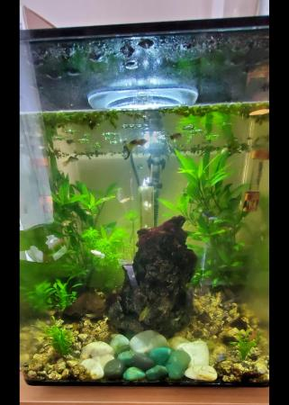 Image 3 of BioOrb cube 60ltr mcr with colour changing led built in