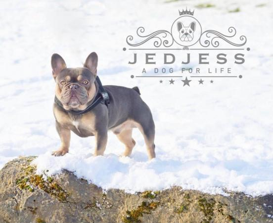 Image 3 of Quality french bulldog puppies from health tested parents